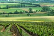 La Agricultura Ecológica es rentable