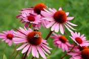 Plantas Medicinales Súper Efectivas