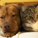Adopción de perros y gatos