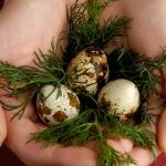 Alergias tratadas con Huevos de Codorniz