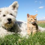 Pipis y cacas de perros y gatos