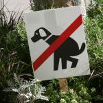 Cacas de perros