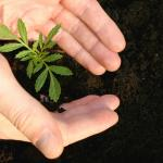 Control de insectos con plantas aromáticas