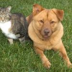 Eliminar las pulgas de perros y gatos