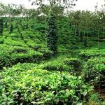 Control de plagas ecológico