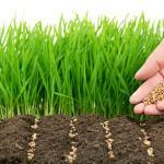 Herbicidas naturales