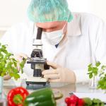 ¿Qué es la bacteria E. coli?