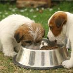 Cloruro de magnesio en veterinaria