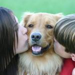 Perros para detectar la diabetes