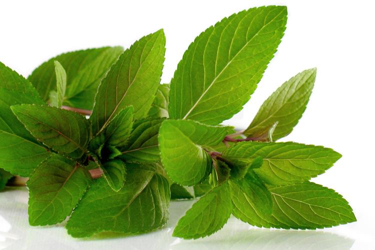 Beneficios de utilizar especias y hierbas arom ticas en la for Cultivo de plantas aromaticas y especias