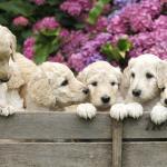 Cachorros huérfanos