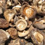 Cultivo de setas de cardo