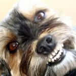 Ladridos del perro