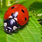 Como actúan los insecticidas naturales