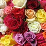 Esencias de Rosas