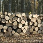 Durabilidad de la madera