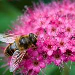 Las abejas están desapareciendo
