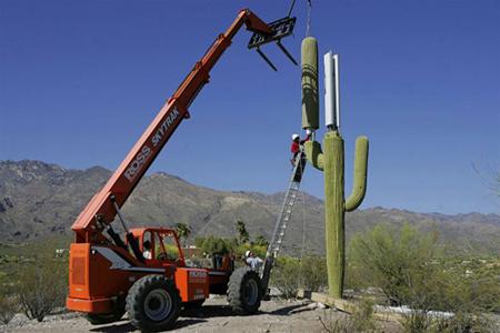 antena-cactus