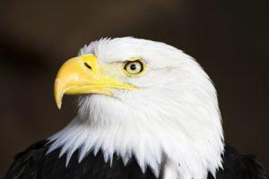El Águila, mensajero del Gran Espíritu