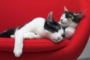 ¿Qué significa el ronroneo de los gatos?