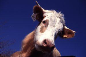 Dieta Vegana, dieta sin productos animales