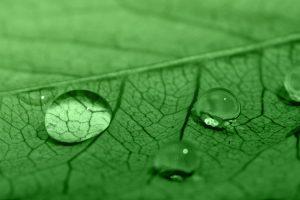 Características del color Verde