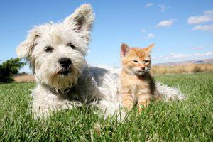 Pipis y cacas de perros y gatos, conflictos y soluciones