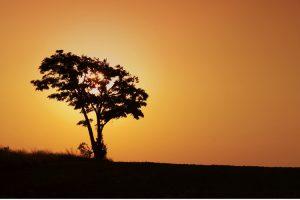 El árbol del Té, Tea Tree: el curalotodo