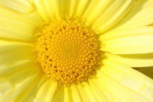 Características del color Amarillo