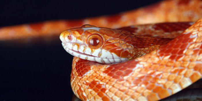 Simbolismo de soñar con serpientes