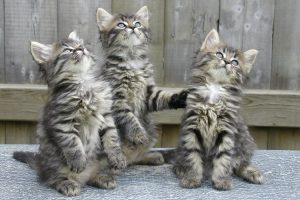 Ejemplos de Flores de Bach para gatos
