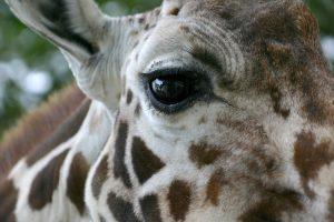 Centros zoológicos y derechos de los animales