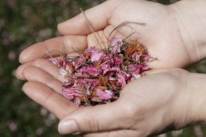 Remedios naturales para el Invierno