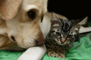 Alternativas a la castración de perros y gatos
