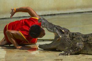 Soñar con cocodrilos, su significado