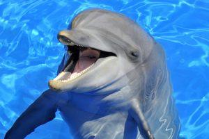 El Delfín, el gran comunicador