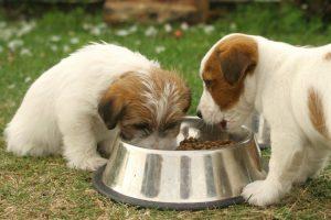 Propiedades del cloruro de magnesio en veterinaria