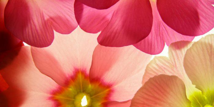 Cromoterapia ambiental, la importancia del color