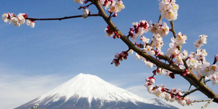 ¿Qué es el Reiki Usui japonés?
