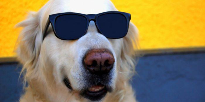 Hoteles para perros, ¿lujo o necesidad?