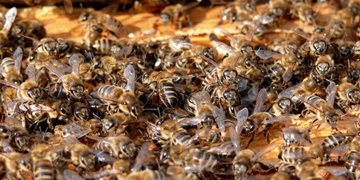 El sentido simbólico de soñar con abejas