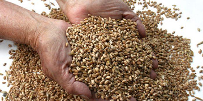 Sémola de trigo, propiedades y usos culinarios