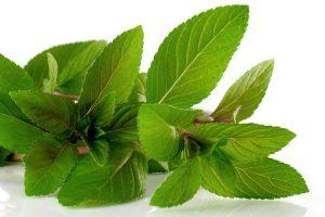 Beneficios de utilizar especias y hierbas aromáticas en la cocina