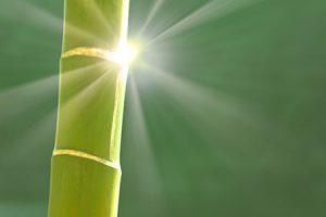 Propiedades del bambú