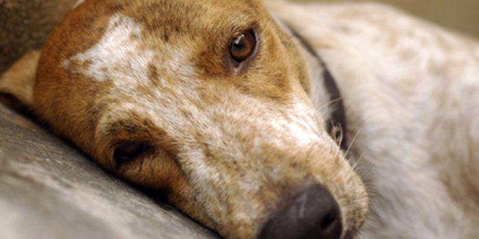 Abandono de perros: una triste realidad