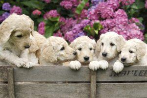 Cachorros huérfanos, como criarlos