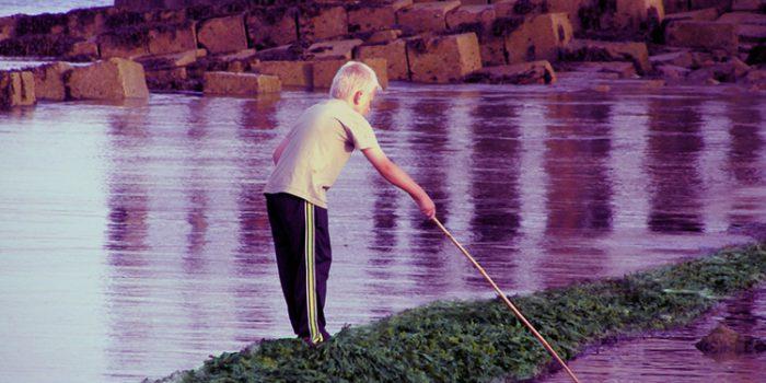 Propiedades del alga wakame