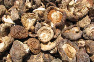Consejos para el cultivo de setas de cardo