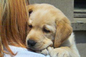 Como desparasitar cachorros