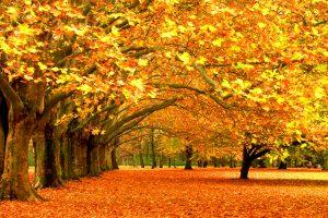 El otoño, el pulmón de la vida